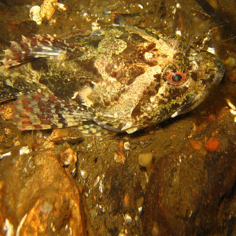 Lebensraum nordsee kologie der k ste for Lebensraum fische